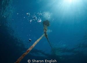 Mooring line on the Konanda Wreck. by Sharon English
