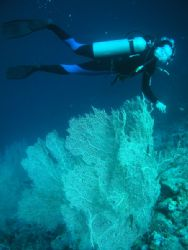 Corals and Diver, Hurghada, Red Sea by Serban Virgil Ionescu