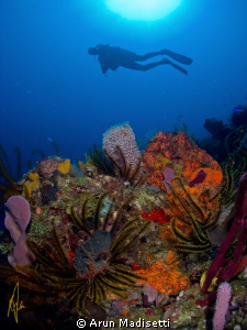 Diver and reef by Arun Madisetti