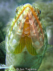 Lizard fish on a rock by Jun Tagama