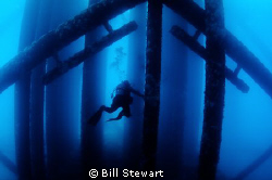Oil Rig dive off the coast of Southern California. by Bill Stewart