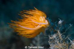 It was taken from Northern Cyprus by Timucin Ucar