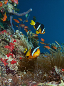 Beautiful marinelife. Canon G10, Dyron 12mm fisheye. by Bea & Stef Primatesta