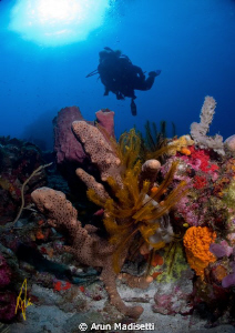 Diver and scenic by Arun Madisetti