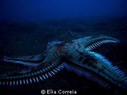 Creepy Comb! by Elia Correia