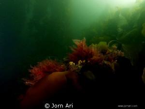 More Photos: www.jornari.com by Jorn Ari