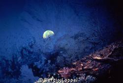 """""""Riflesso di Luna"""" ripresa attraverso un  ramo di gorgoni... by Sergio Loppel"""