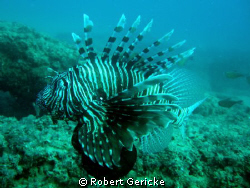 Lion fish by Robert Gericke