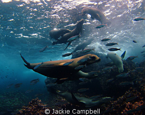 Galapagos Playground !!! Gapalagos sealions are amongst ... by Jackie Campbell