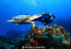 Hawksbill turtle and diver - Cozumel by Brian Lasenby