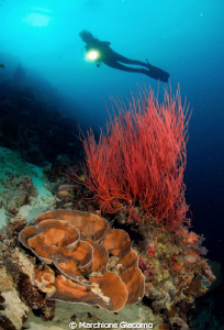 Deep red Nikon D200.10,5mmnikor.twinstrobo sea and sea 1... by Marchione Giacomo