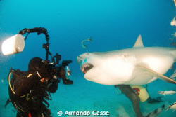 Bull shark up close and personal by Armando Gasse