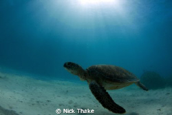 Crusing turtle by Nick Thake