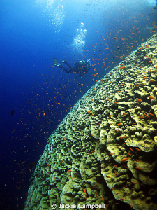 Coralscape. Very impressive to see and home to a lot of  ... by Jackie Campbell
