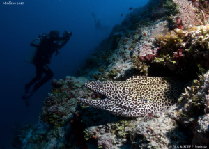 Moray eel. Canon G10, Dyron 12mm fisheye. by Bea & Stef Primatesta