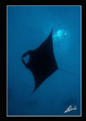 just another manta above... by Adriano Trapani