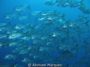 Marine life around the Wit Shoal by Abimael Márquez