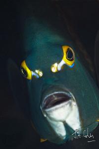 Angel Fish by Julian Cohen