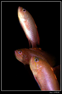 Anthais on their way up ... by Daniel Strub