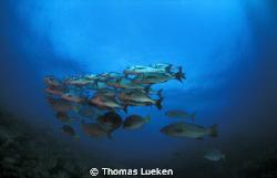 fond in Galapagos by Thomas Lueken