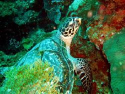 Jolie petite tortue aux Philippines by Philippe Brunner