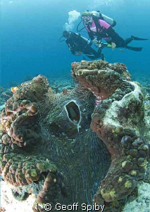 giant clam and divers, Raja Ampat by Geoff Spiby