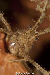 grumpy ole man crab by Dave Baxter