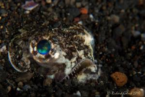 Snakefish-Lembeh by Richard Goluch