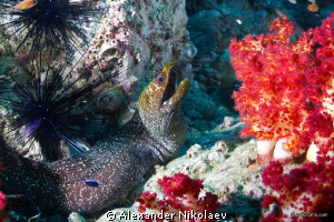 In the coral garden by Alexander Nikolaev