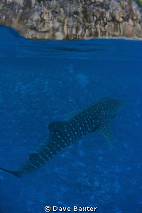 whaleshark and the island of Christmas taken during the s... by Dave Baxter