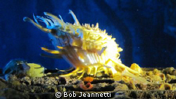 What kind of clam is this? by Bob Jeannetti