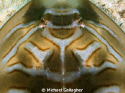 Aerial view (breaking the golden rule, I know!!) of an Ea... by Michael Gallagher