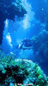 85 feet at Palancar reef by Bob Jeannetti