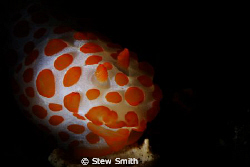 nudi snooted by Stew Smith