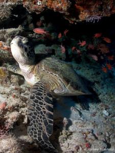 Turtle. Canon G10, 12mm fisheye. by Bea & Stef Primatesta