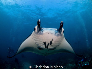 Manta Ray with divers on a great dive with World Diving o... by Christian Nielsen