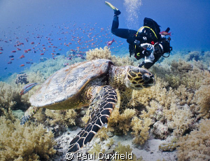 Because of her positioning my buddy Shelly has almost the... by Paul Duxfield