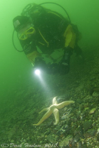 Diver and star. D3. 16mm with 2xtc. Menai straits. by Derek Haslam