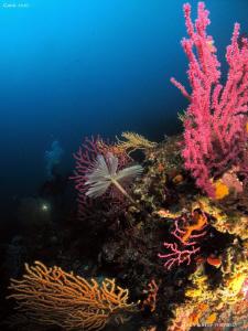 Amazing colourful Med Sea. Calanques de Cassis. Canon G10... by Bea & Stef Primatesta