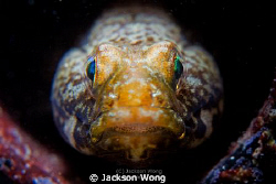 Goby portrait. by Jackson Wong