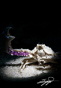 Snooting a crab by Nicholas Samaras