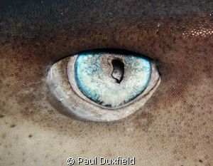 Sharks Eye shot with an Ixus980 and Inon Close Up lens an... by Paul Duxfield