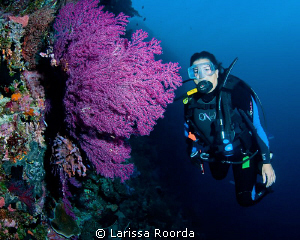 Jo and a beautiful soft coral fan in Palau.  Big Drop Off. by Larissa Roorda
