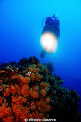 A diver explores seabed by Vittorio Durante