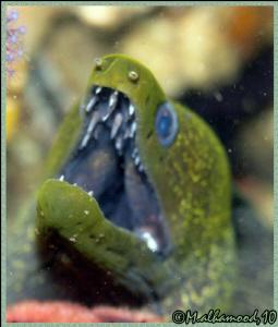 Close up on Eel   Pleace: Masandam \ Oman  by Olympus C... by Mohammed Al Hamood