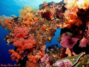 Nusa Penida - Bali Canon S 90 + Fantasea Bigeye Lens 67 ... by Andy Chan