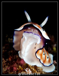Nudi in action by Vincent Toh