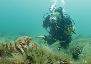 Chris with spider crab. North Wales. D3. 16mm with 2xtc. by Derek Haslam
