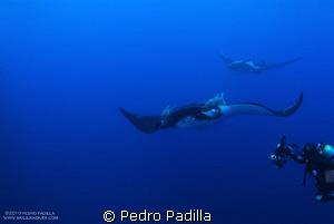 Diving with Big Mantas @ Socorro. I use my nikkon D80 wit... by Pedro Padilla