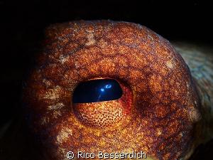 Eye of an octopus ( octopus vulgaris; common octopus ). C... by Rico Besserdich